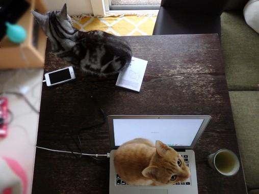 トムドロ1127上から二猫