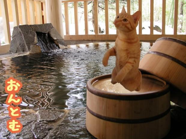 温泉 トム 猫
