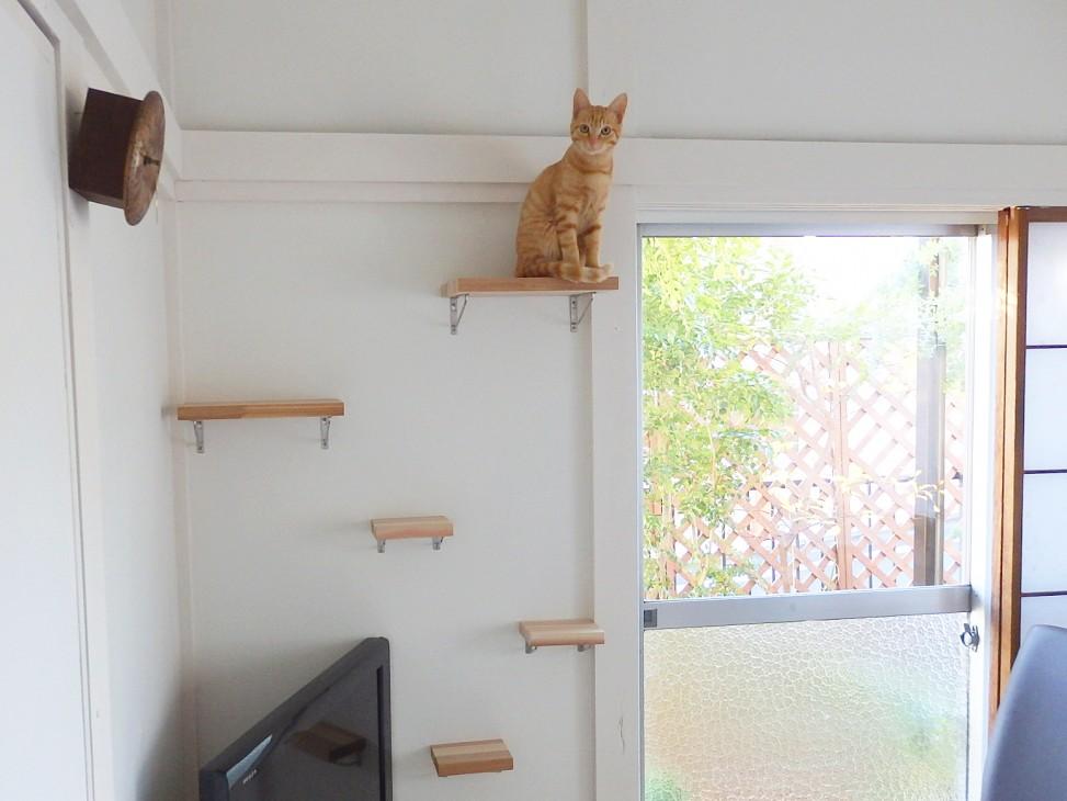 catwalk DIY