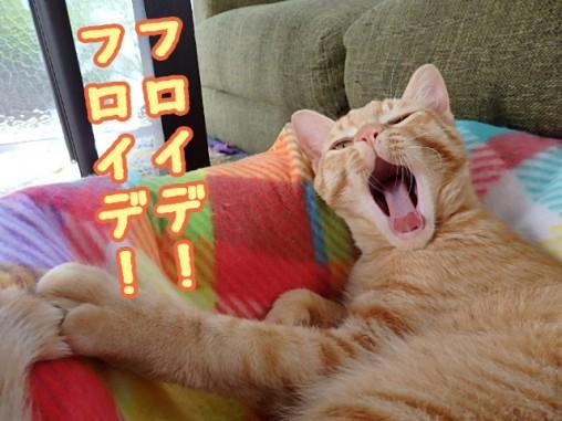 猫ブログ トムドロ フロイデ