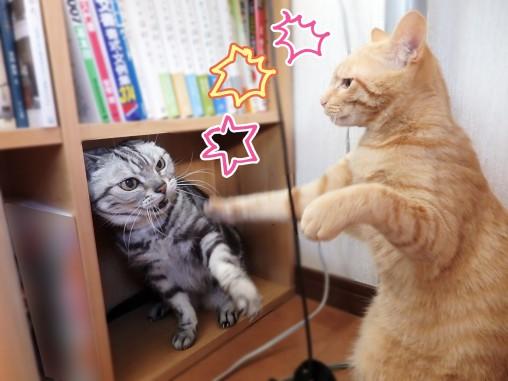 トムドロ 猫ブログ けんか