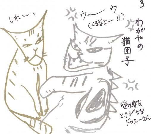 トムドロ 猫ブログ