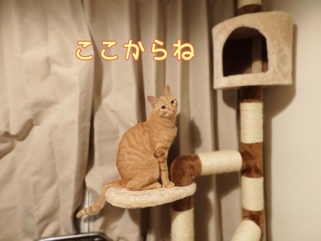 猫ブログ トムドロ